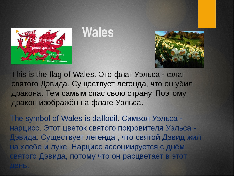 Wales The symbol of Wales is daffodil. Символ Уэльса - нарцисс. Этот цветок...