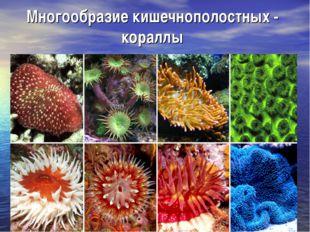 Многообразие кишечнополостных - кораллы