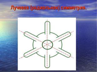 Лучевая (радиальная) симметрия.