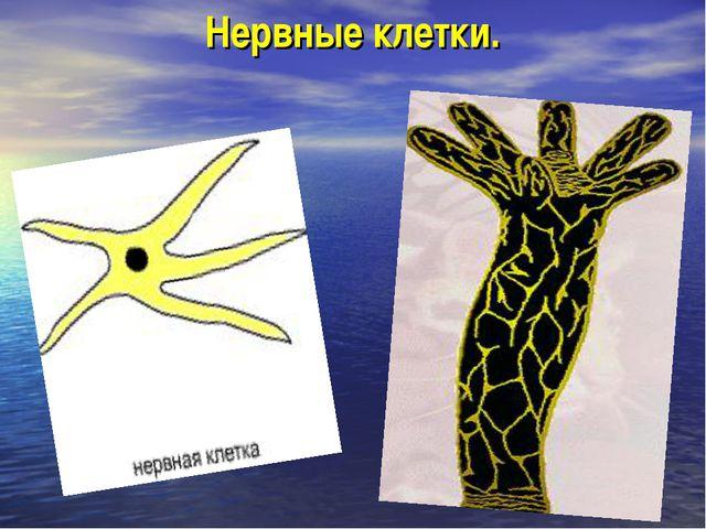 Нервные клетки.