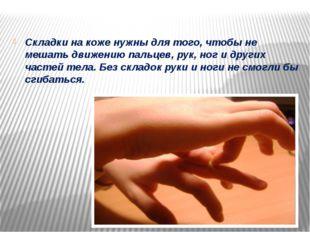 Складки на коже нужны для того, чтобы не мешать движению пальцев, рук, ног и
