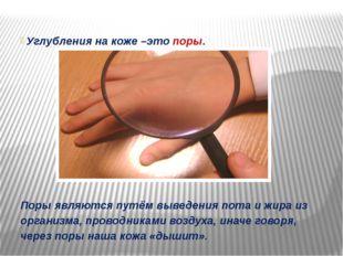 Углубления на коже –это поры. Поры являются путём выведения пота и жира из о