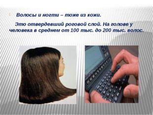 Волосы и ногти – тоже из кожи. Это отвердевший роговой слой. На голове у чел