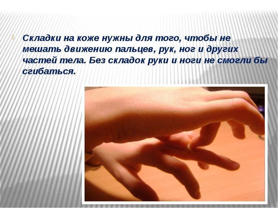 Складки на коже нужны для того, чтобы не мешать движению пальцев, рук, ног и...