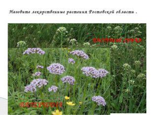 Назовите лекарственные растения Ростовской области . ЗВЕРОБОЙ ДУШИЦА ПАСТУШЬ