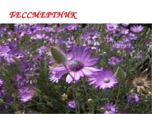 О каком растении Дона пишет А.Сафронов «Как будто из меди его лепестки И стеб