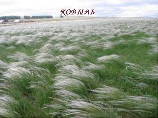 Какое растение на Дону называют шелковой травой? КОВЫЛЬ
