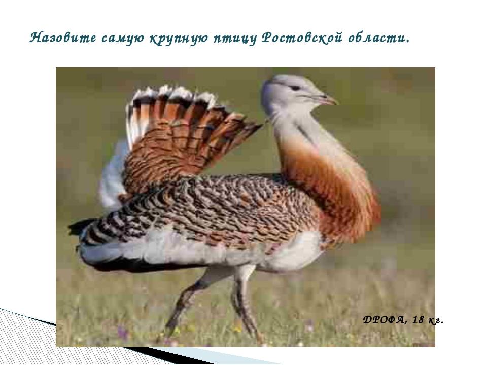 Назовите самую крупную птицу Ростовской области. ДРОФА, 18 кг.