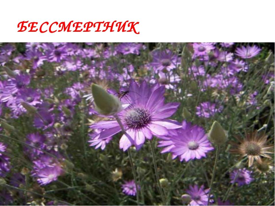 О каком растении Дона пишет А.Сафронов «Как будто из меди его лепестки И стеб...