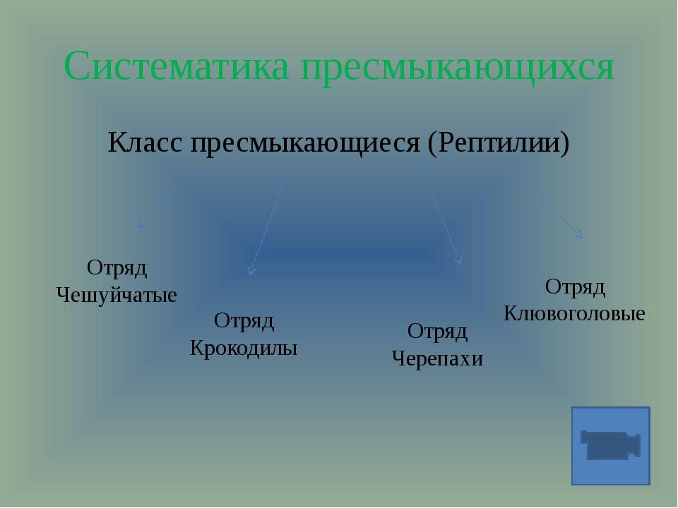 Систематика пресмыкающихся Класс пресмыкающиеся (Рептилии) Отряд Чешуйчатые О...