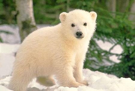 Медвежонок на снегу