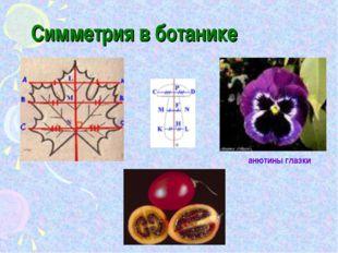 Симметрия в ботанике анютины глазки