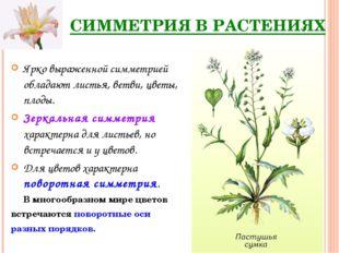 СИММЕТРИЯ В РАСТЕНИЯХ Ярко выраженной симметрией обладают листья, ветви, цвет
