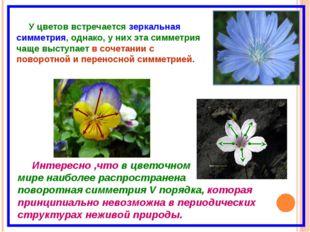 У цветов встречается зеркальная симметрия, однако, у них эта симметрия чаще в