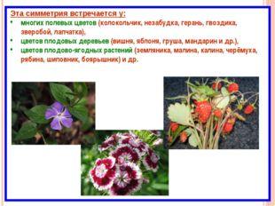 Эта симметрия встречается у: многих полевых цветов (колокольчик, незабудка, г