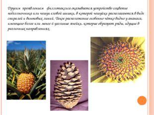 Другим проявлением филлотаксиса оказывается устройство соцветие подсолнечника