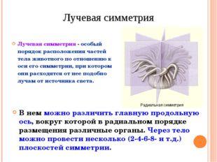 Лучевая симметрия - особый порядок расположения частей тела животного по отно