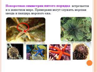 Поворотная симметрия пятого порядка встречается и в животном мире. Примерами
