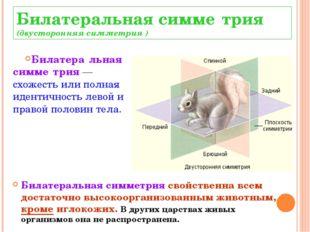 Билатеральная симме́трия (двусторонняя симметрия ) Билатера́льная симме́трия