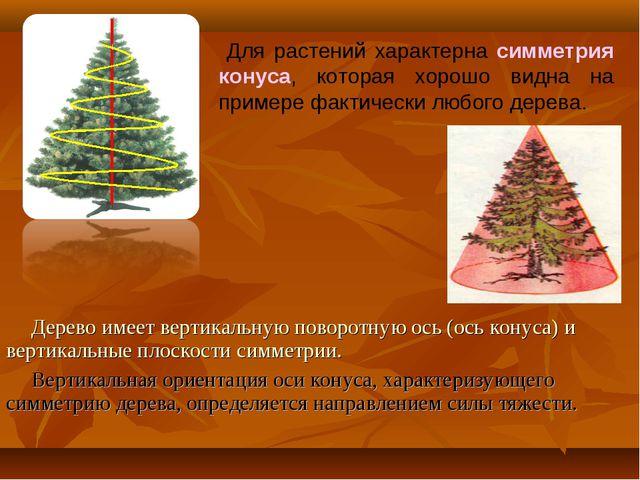 Для растений характерна симметрия конуса, которая хорошо видна на примере фа...