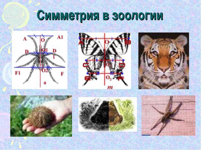 Симметрия в зоологии