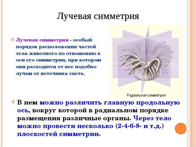 Лучевая симметрия - особый порядок расположения частей тела животного по отно...