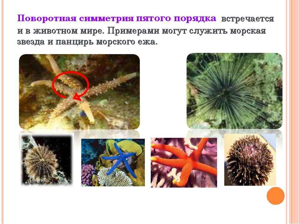 Поворотная симметрия пятого порядка встречается и в животном мире. Примерами...