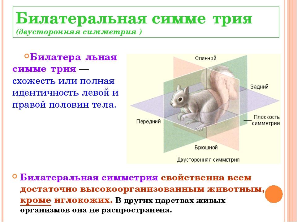 Билатеральная симме́трия (двусторонняя симметрия ) Билатера́льная симме́трия...