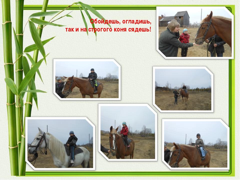 Обойдешь, огладишь, так и на строгого коня сядешь!