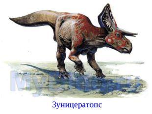 Зуницератопс