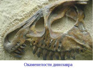 Окаменелости динозавра