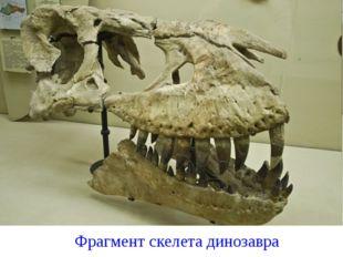 Фрагмент скелета динозавра