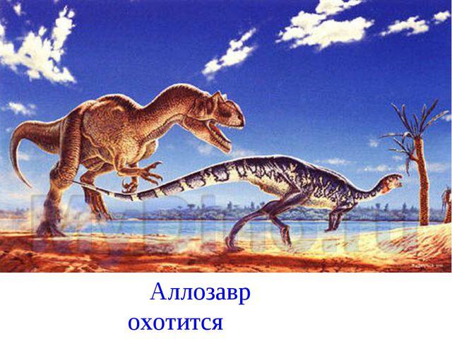 Аллозавр охотится