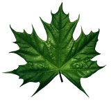 http://clipartmania.ru/uploads/gallery/main/441/green-leaves-12.png