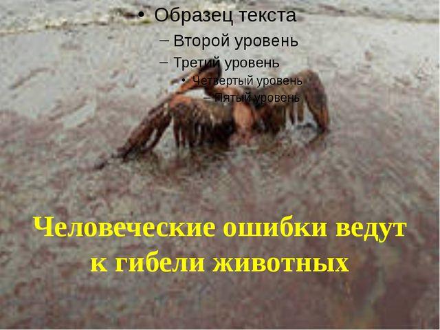 Человеческие ошибки ведут к гибели животных