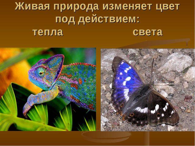 Живая природа изменяет цвет под действием: тепла света