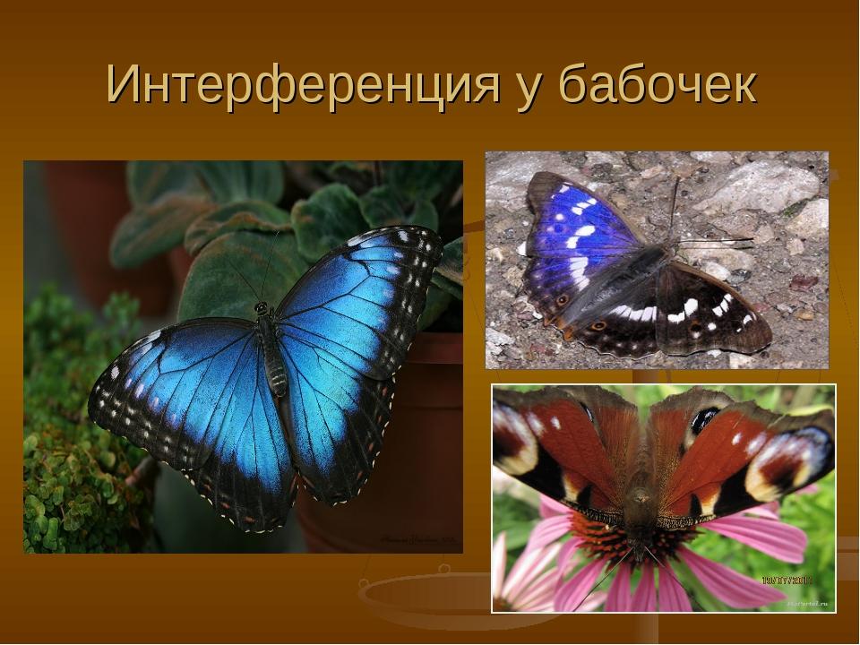 Интерференция у бабочек