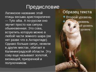 Предисловие Латинское название этой птицы весьма аристократично — Tyto alba.