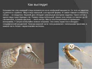 Как выглядит Большинство этих названий птицы возникло из-за ее необычной внеш