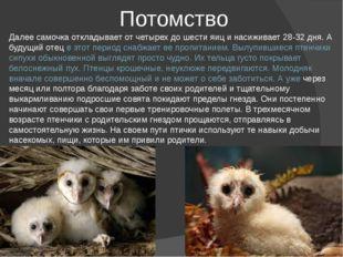 Потомство Далее самочка откладывает от четырех до шести яиц и насиживает 28-3