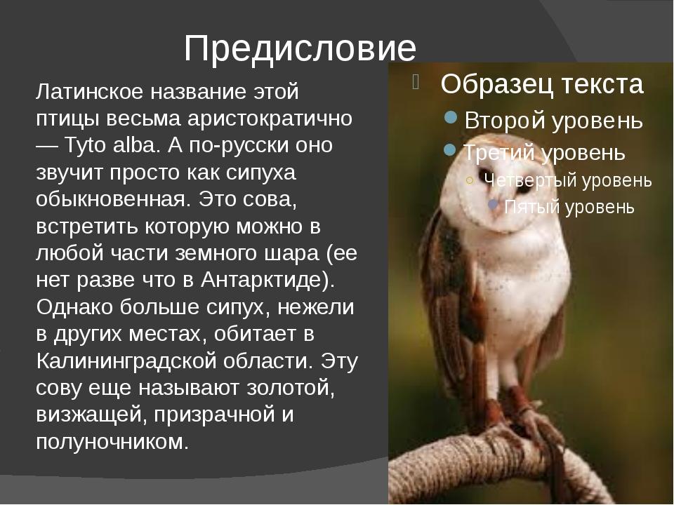 Предисловие Латинское название этой птицы весьма аристократично — Tyto alba....