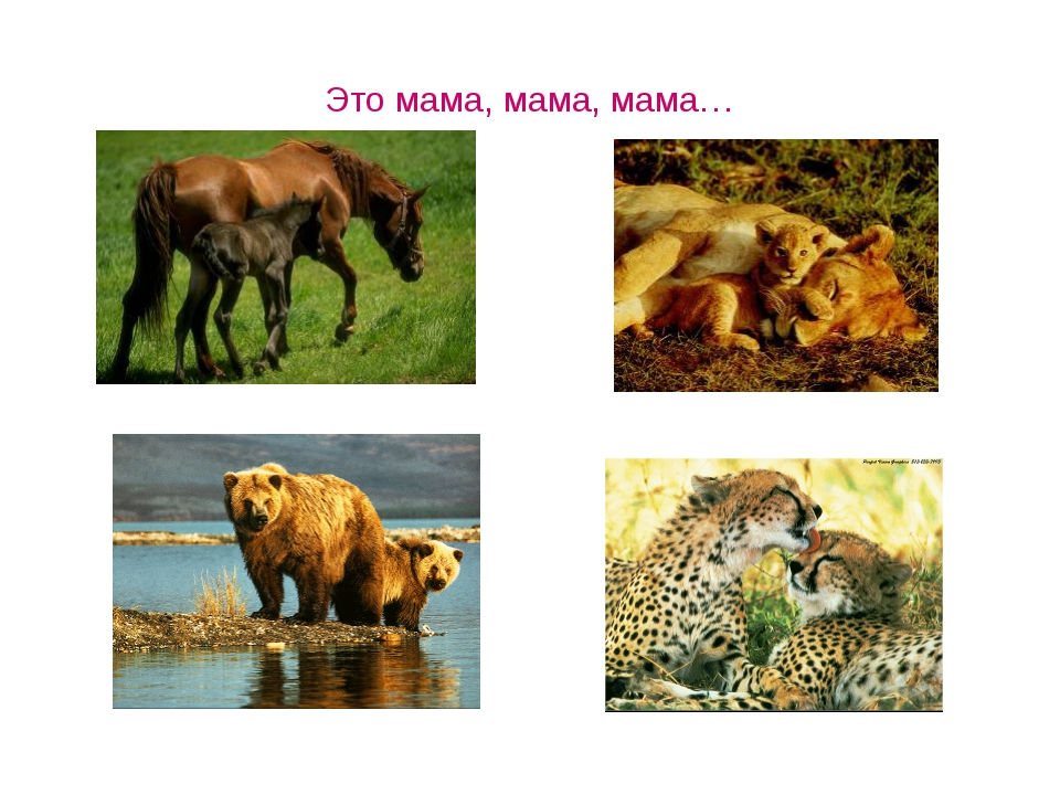 Это мама, мама, мама…