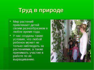 Труд в природе Мир растений привлекает детей своим разнообразием в любое вре