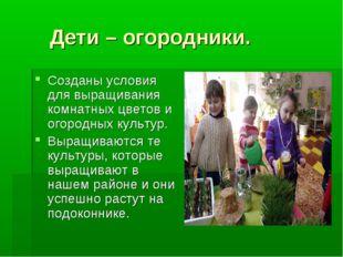 Дети – огородники. Созданы условия для выращивания комнатных цветов и огород