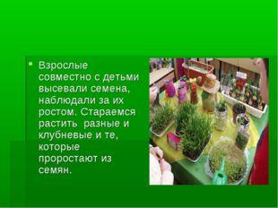 Взрослые совместно с детьми высевали семена, наблюдали за их ростом. Стараемс