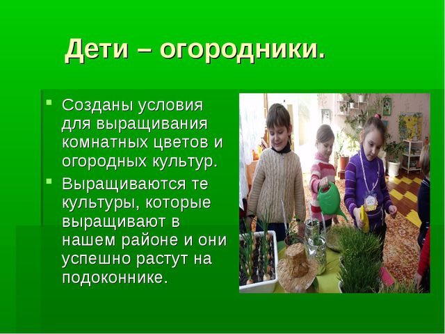 Дети – огородники. Созданы условия для выращивания комнатных цветов и огород...
