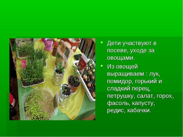 Дети участвуют в посеве, уходе за овощами. Из овощей выращиваем : лук, помидо...