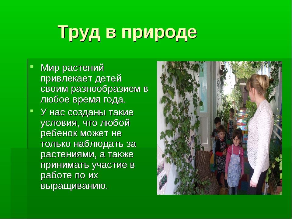 Труд в природе Мир растений привлекает детей своим разнообразием в любое вре...