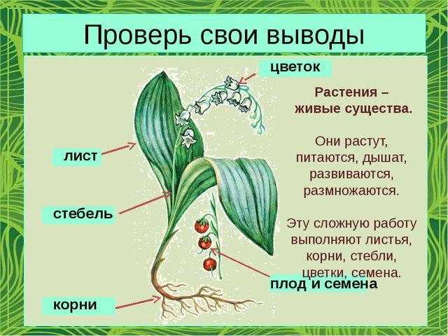 Проверь свои выводы цветок плод и семена лист стебель корни Растения – живые...