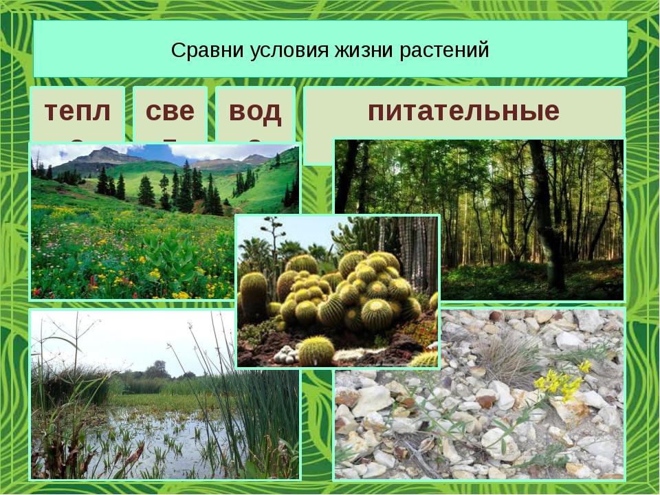 Сравни условия жизни растений тепло свет вода питательные вещества